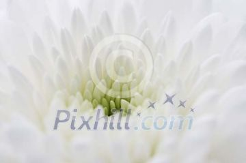 Background of a white flower