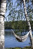 Black and white srtriped hammock hanging from birches