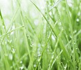 Closeup of a green grass with waterdrops