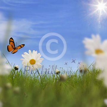 Shallow grass, daisies and butterfly spring conceptual