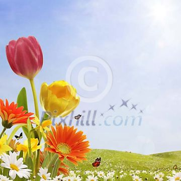 Various spring flowers in idyllic surroundings