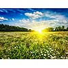 Summer blooming green field with meadow flowers with sunset sun and blue sky